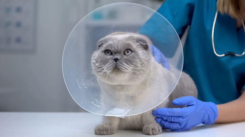 Animal Emergency Care