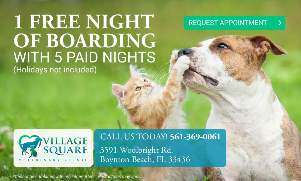 one free night of boarding