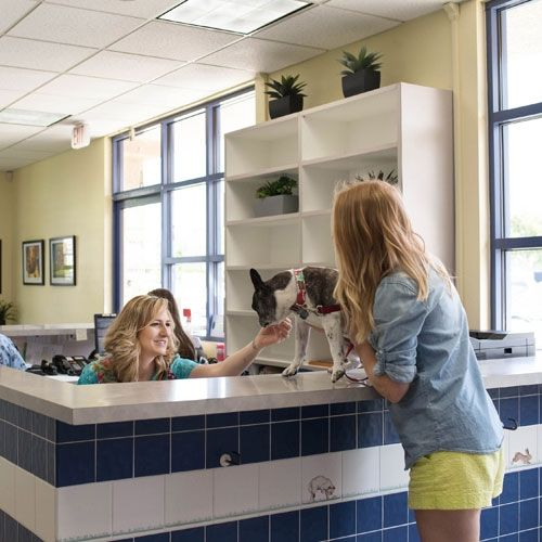 New Customers - Care Animal Hospital