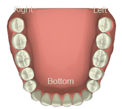 Interactive Meridian Tooth Chart App - Teeth Set