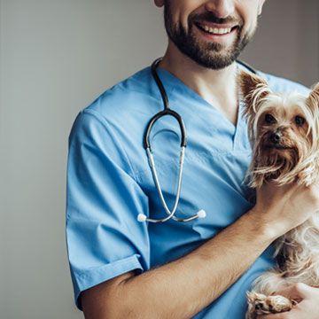 happy dog and vet