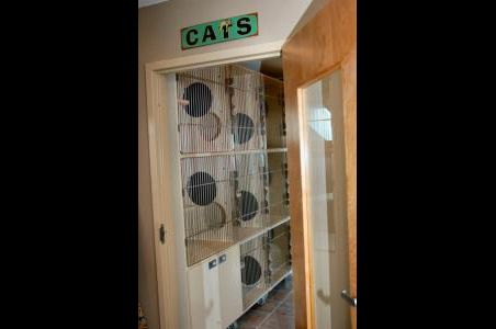 cat condo in waynesville