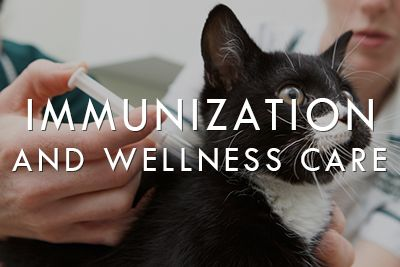 Immunization and Wellness Care